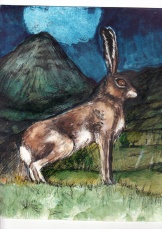 Mountain Hare Evening